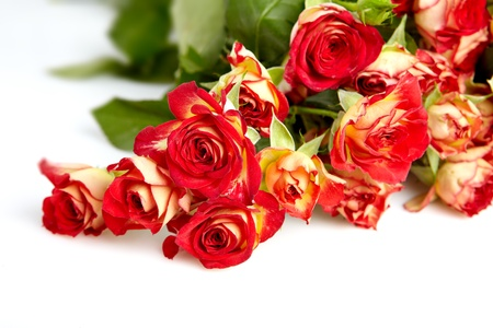 bereavement: roses in a bunch isolated on a white background with space for text  Stock Photo