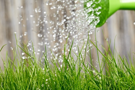 watering can: pouring from watering can on grass water  Stock Photo
