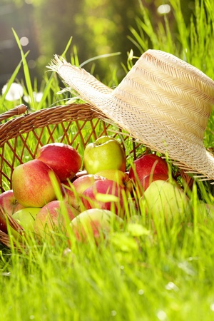 Red apples and garden basket in green grass  photo
