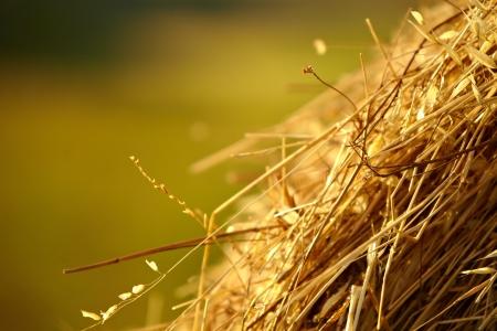 bail: Tuscany Landscape With  Hay Bales Stock Photo
