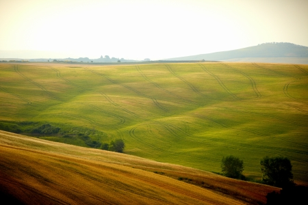 cypress tree: View of typical Tuscany landscape