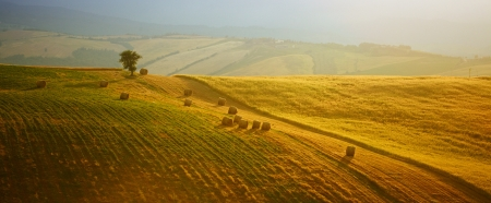 toscana: Scenic view of Tuscany landscape, Italy .  Nature background