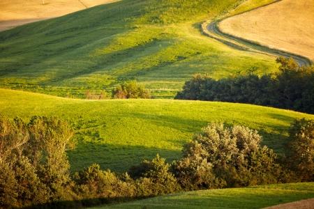 paisaje rural: Paisaje al atardecer en la Toscana en verano