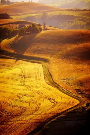 typical Tuscany landscape, Italy  photo