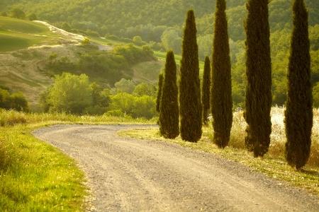 Typisch landschap in Val d'Orcia (Toscane, Italië) in de zomer. Road.