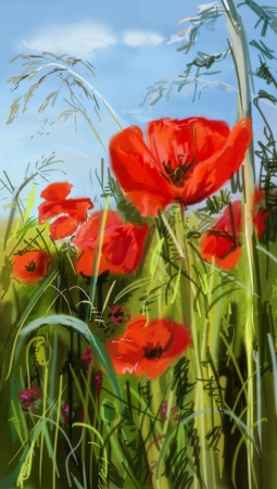 Field of poppies - illustration  illustration