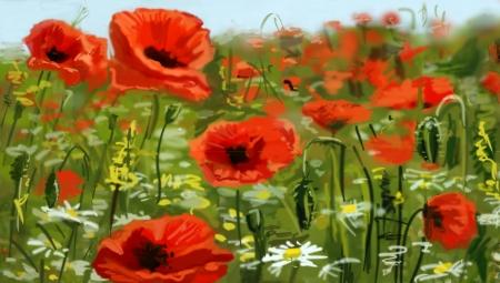 opium poppy: Field of poppies - illustration
