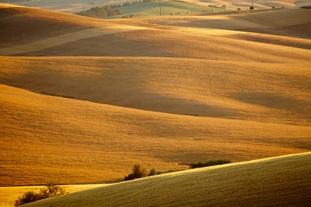 the tuscan: image of typical tuscan landscape