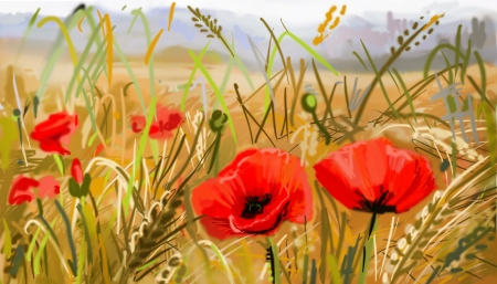 flower close up: Field of poppies - illustration