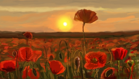 flowers close up: Field of poppies - illustration