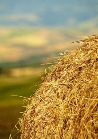 bail: Mown wheat field, large round bales of hay, field of corn in the distance