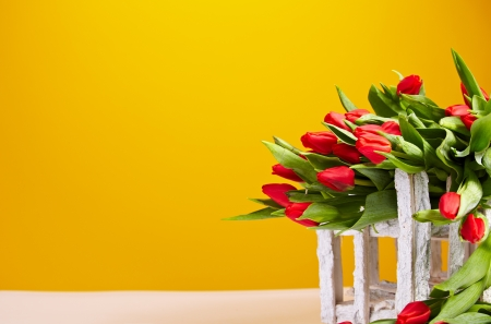 baclground: Red tulips isolated on yellow  Spring background