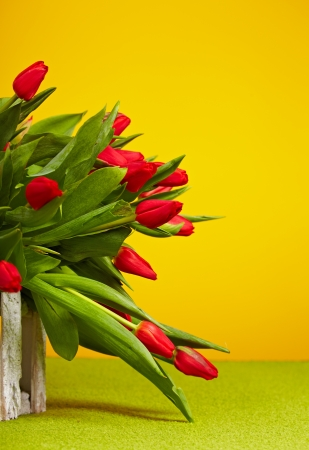 tulips in vase: Red tulips isolated on yellow  Spring background