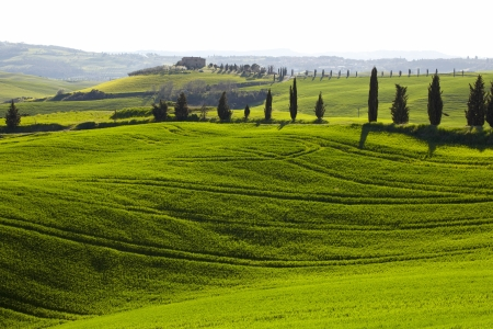 siena: Tuscany hills