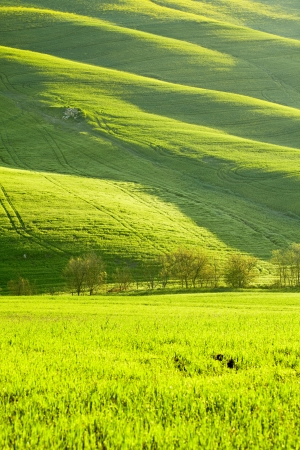 morning on countryside in Tuscany  photo