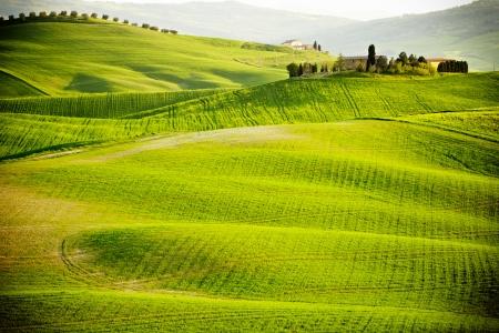 ma? en campo en la Toscana Foto de archivo