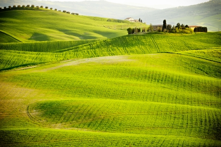 the countryside: mattina sulla campagna in Toscana