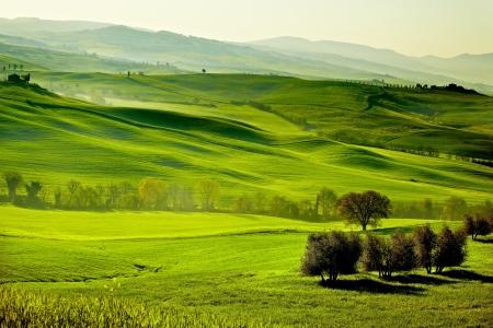 san quirico: Countryside, San Quirico ´Orcia , Tuscany, Italy  Stock Photo