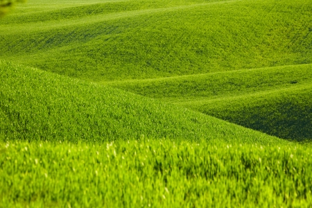 san quirico: Countryside, San Quirico d Orcia , Tuscany, Italy  Stock Photo