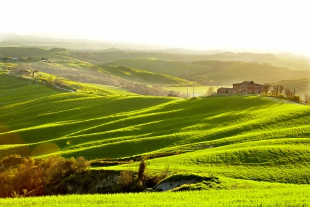 Countryside, San Quirico d`Orcia , Tuscany, Italy  Stock Photo - 19841975