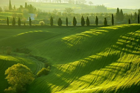 Countryside, San Quirico d`Orcia , Tuscany, Italy Stock Photo - 19841976