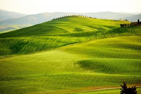 quirico: Countryside, San Quirico d`Orcia , Tuscany, Italy