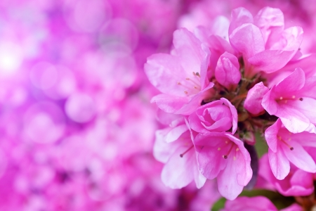 Flower  blossoms over blurred nature backgroundSpring Background with bokeh  photo