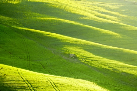 agriturismo: Countryside, San Quirico d´Orcia, Tuscany, Italy Stock Photo