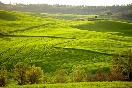 san quirico: Countryside, San Quirico d´Orcia, Tuscany, Italy