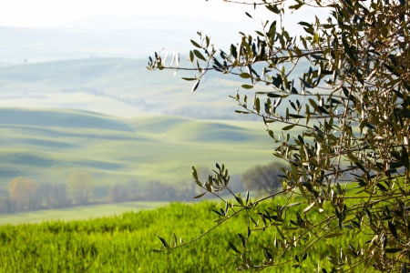 Countryside, San Quirico d´Orcia, Tuscany, Italy photo