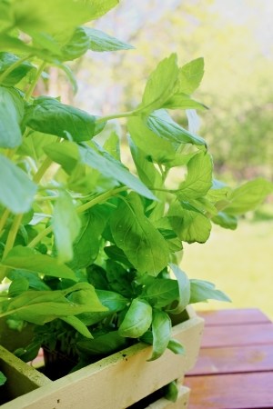 Fresh aromatic herbs on garden background  photo