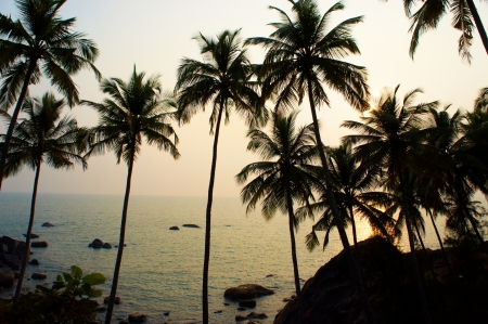 taken: Palms and sun, tropical sunset taken in Goa, India