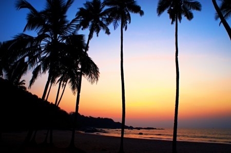 sunset painting: Palms and sun, tropical sunset taken in Goa, India