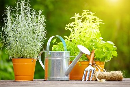 garden tool: concept of gardening and hobby