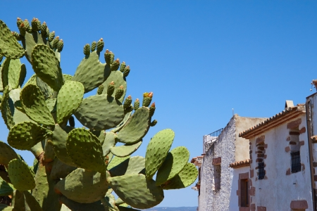 hause: Beautiful cactus near the stone hause at the sky