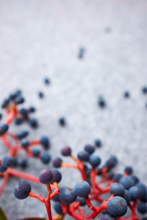 bunchy: Autumn abstract berrys background Stock Photo
