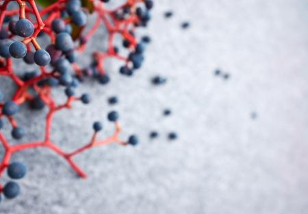 bunchy: Oto�o abstracto berrys fondo