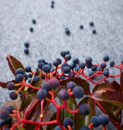 bunchy: Oto�o fondo abstracto berrys