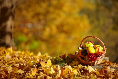 Autumn background photo