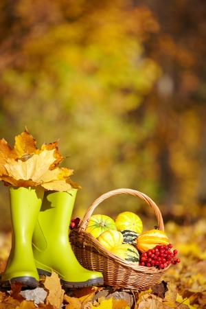Autumn gardening background  photo