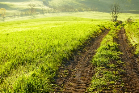 quirico: Countryside, San Quirico d Orcia , Tuscany, Italy  Stock Photo