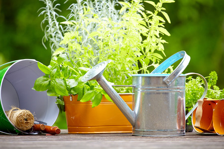 concept of gardening and hobby  photo
