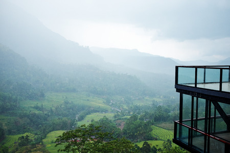 early morning tea plantations in Sri Lanka photo