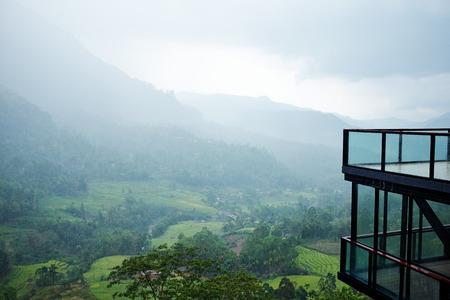 lanka: early morning tea plantations in Sri Lanka