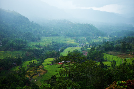 green tee terrasses in the highland from Sri Lanka in fog photo