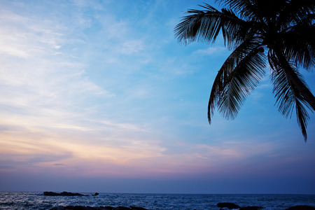 blue sunset and palm . Sri Lanka beach photo