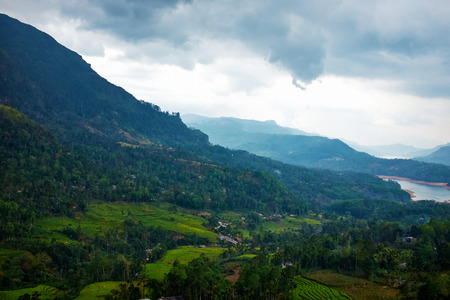 Landscape with green fields of tea in Sri Lanka  photo