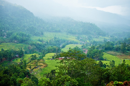 agriculture sri lanka: Landscape with green fields of tea in Sri Lanka  Stock Photo