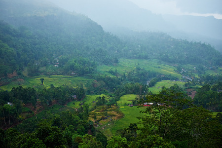 cameron highlands: Landscape with green fields of tea in Sri Lanka  Stock Photo