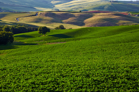san quirico d'orcia: Countryside, San Quirico d`Orcia , Tuscany, Italy